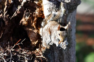 Jewish Squirrels inhabit New Jersey Forest